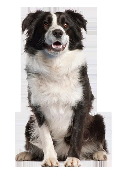 Kutyakozmetikus tanfolyam 2017. szeptember