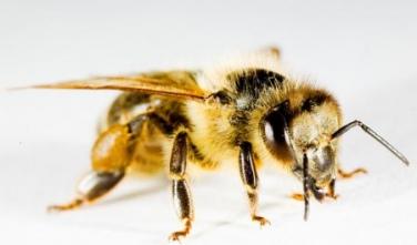 Méhész tanfolyam 2018. május