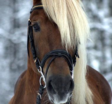 Sportoktató (lovassport)