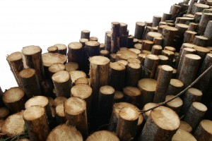 Lakott területi fakitermelő 2020. február
