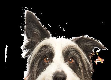 Kutyakozmetikus tanfolyam 2018. május
