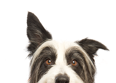 Kutyakozmetikus tanfolyam 2020. április