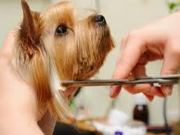 A kutyakozmetika története