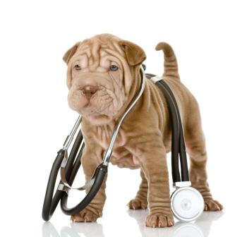 Állatorvosi asszisztens tanfolyam 2016. július