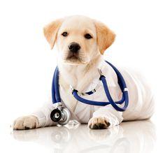 Kisállatgyógyászati asszisztens