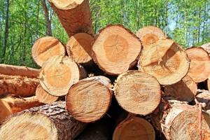 fakitermelő képzés