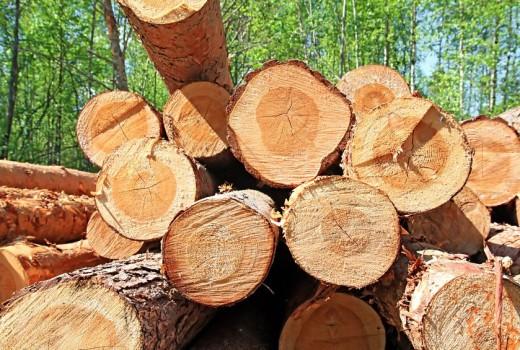 Lakott területi fakitermelő