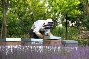 Miért végezze el a méhész tanfolyamot?