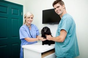 állatorvosi asszisztens képzés