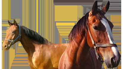 Sportoktató (lovassport) 2018. július