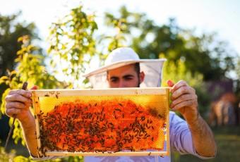 Szeretne tenni valamit a természetért? Válassza méhész képzésünket!