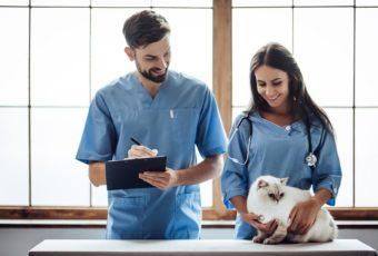 Kisállatgyógyászati asszisztens képzésünk elvégzésével rövid idő alatt elhelyezkedhet az állategészségügyben!