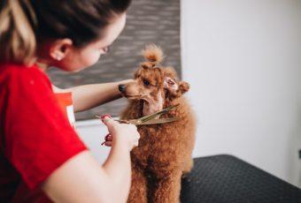 Kutyakozmetikus tanfolyam: helyezkedjen el egy kreatív, változatos területen!