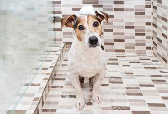 Kutyakozmetikus tanfolyamunkon mindent megtanulhat egy népszerű szakmáról!
