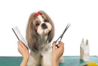 Kutyakozmetikus tanfolyam 2020-ban utoljára OKJ keretek között!