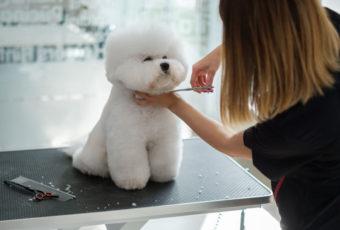 Kutyakozmetikus tanfolyam 2021 májusában!