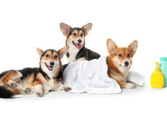 Kutyakozmetikus képzés 2021 szeptemberében is!